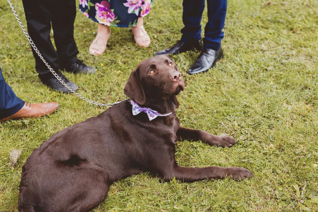 dog-jen-and-mat's-festival-wedding-at-Scraptoft farm
