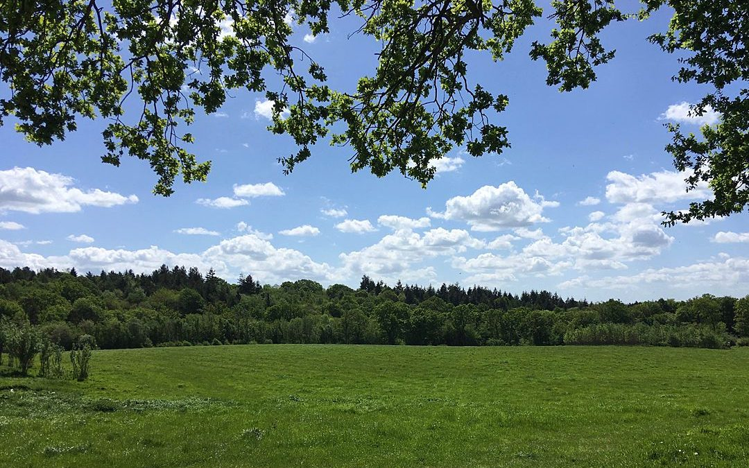 Festival Wedding Venue | Secluded Woodland, Meadow and Camping Field